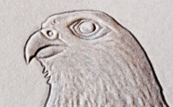 Head Detail of Embossed Falcon