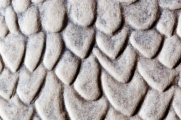 Feather Detail of Embossed Falcon