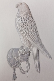 Embossed Falcon on Glove